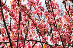 fleurs-lumineuses-au-printemps-37680534